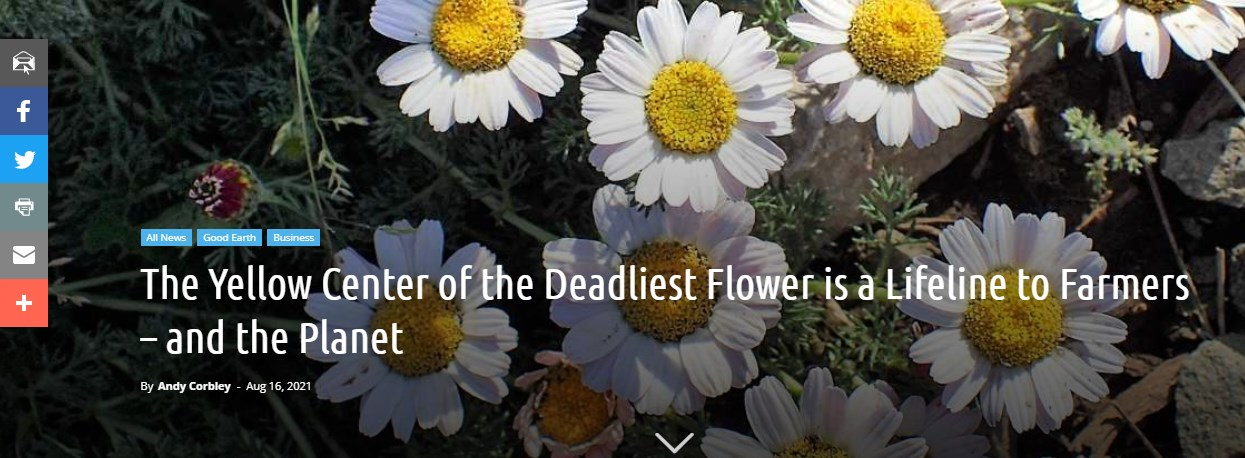 The Yellow Center of the Deadliest Flower is a Lifeline to Farmers – and the Planet
