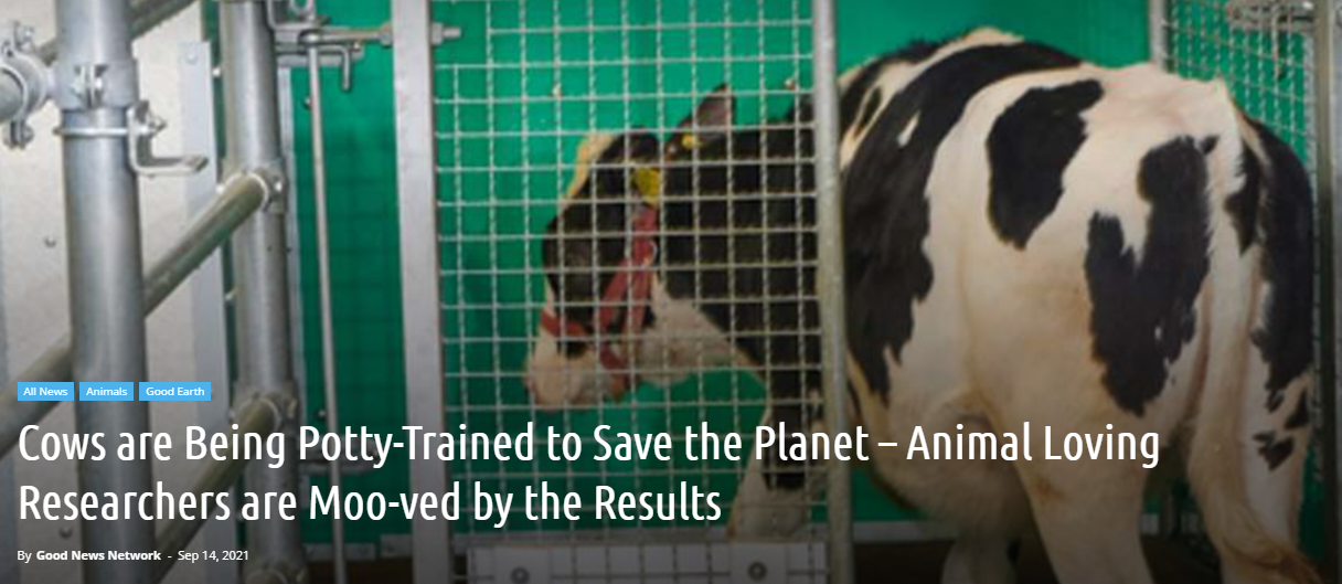 Cows are Being Potty-Trained to Save the Planet