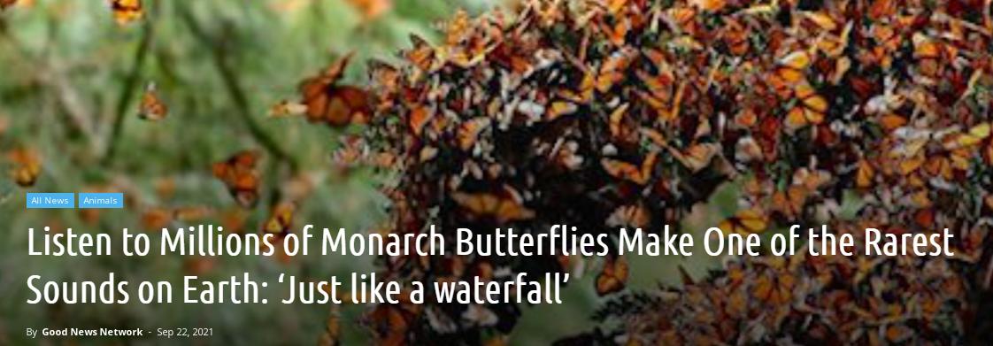 Listen to Millions of Monarch Butterflies